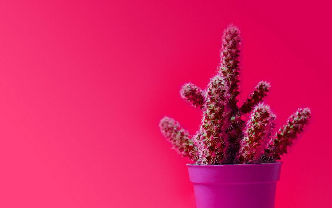 HOW PRICKLY ARE YOU ON A MONDAY MORNING?